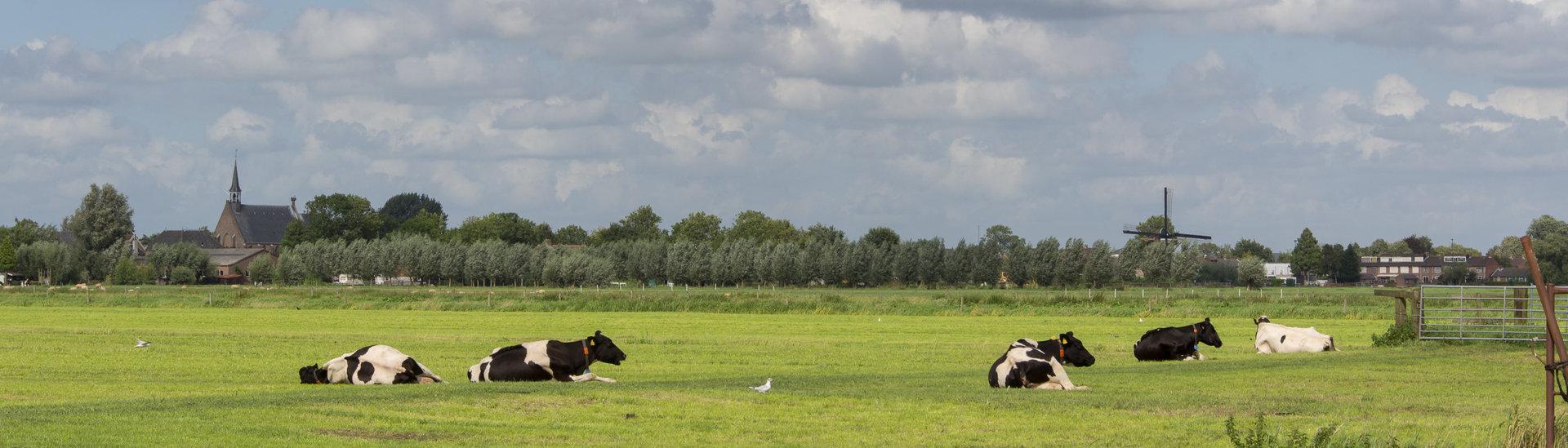 Polder ten zuiden van Molenaarsgraaf